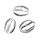 dibujo granos de café